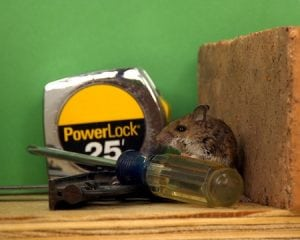 How to Keep Your Garage Free from Rodents