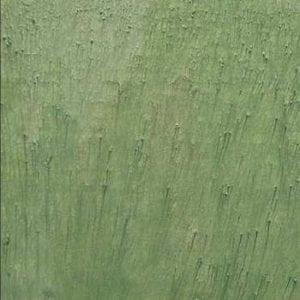 p1530-seaweed